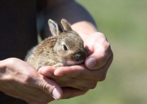 rabbit-913550